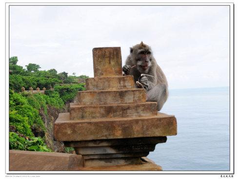 巴厘岛情人崖和乌鲁瓦图神庙游记 猴子17.jpg