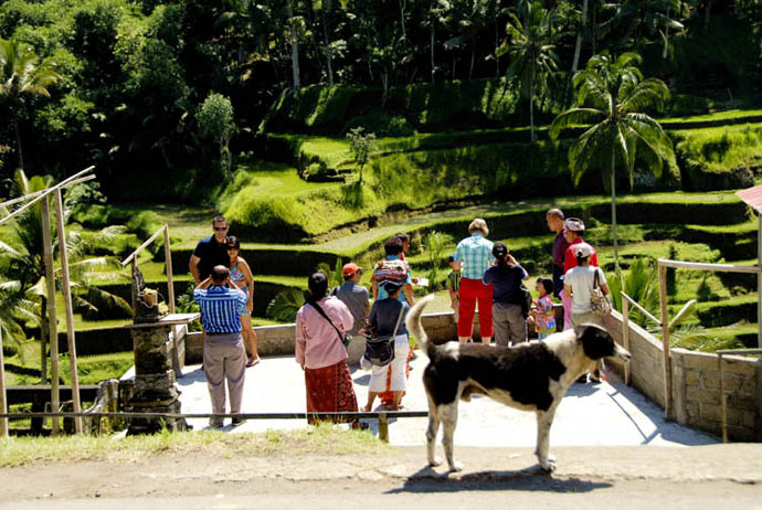 巴厘岛自由行游记——路过德格拉朗梯田(Tegallalang)