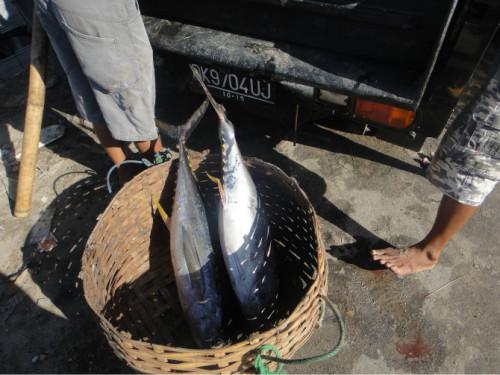 巴厘岛游记:海鲜控的天堂,金巴兰海鲜市场!8.JPEG