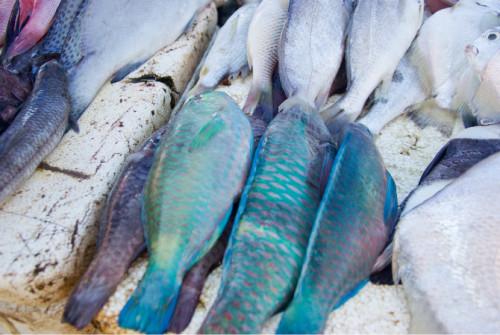 巴厘岛游记:海鲜控的天堂,金巴兰海鲜市场!17.JPEG