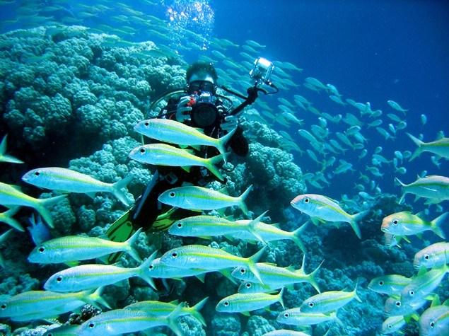 巴厘岛图兰奔(Tulamben)潜水点介绍13.jpg