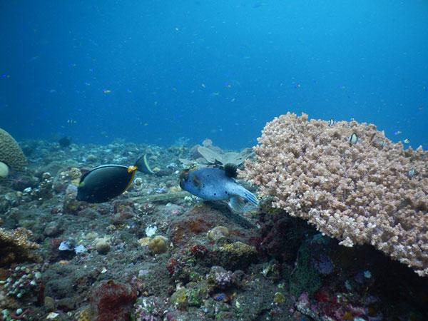 图兰奔 (Tulamben)海底4.jpg