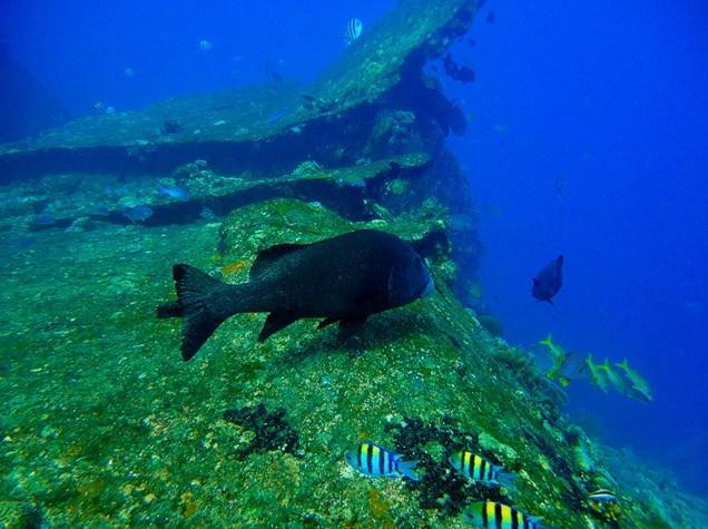 巴厘岛图兰奔(Tulamben)潜水点介绍