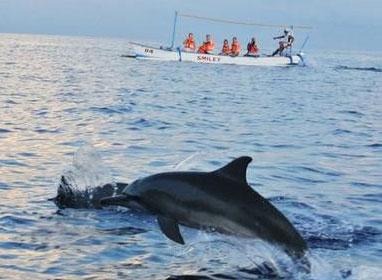 去lovina看海豚需要了解的几个问题