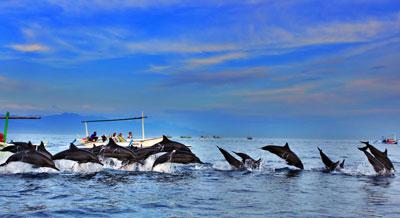 巴厘岛自由行旅游租车代理 去罗威纳\罗威拿\Lovina看海豚包车一日游和两日游