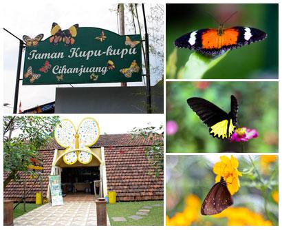 巴厘岛蝴蝶公园(Taman Kupu Kupu)30.jpg