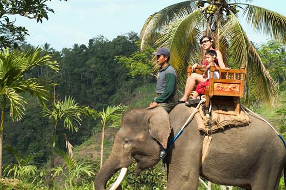 巴厘岛骑大象预定 Bakas Elephant Safari Park 大象公园骑大象自由行代理预订