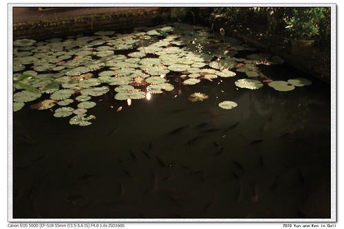 Lotus Cafe9.jpg