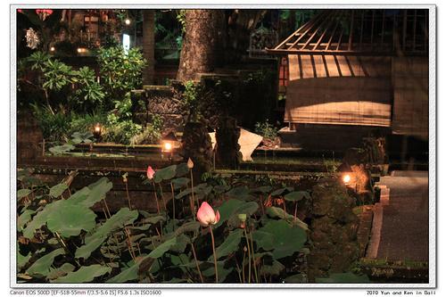 Lotus Cafe8.jpg