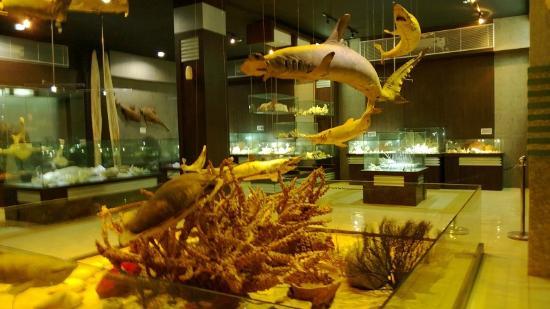 巴厘岛库塔贝壳博物馆之旅