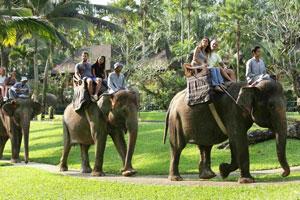 Bali Adventure巴厘岛大象公园门票+骑大象一日游 巴厘岛一日游套餐代理预订