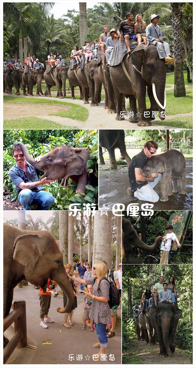 大象公园.jpg