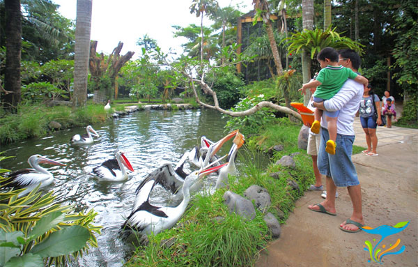 Bali Bird Park 巴厘岛鸟园攻略