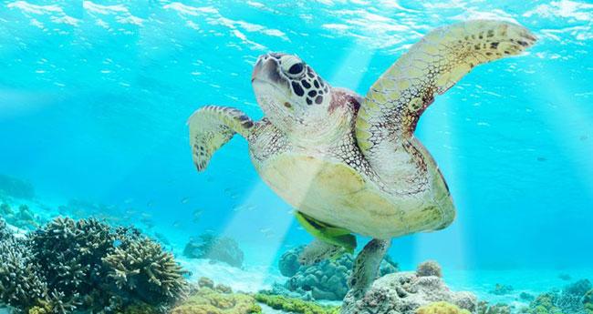 巴厘岛潜水者健康提示:哪些类型的人群不适合潜水(深潜)