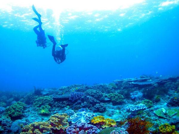 Padang Bai Diving 巴厘岛巴丹拜(帕当拜)潜水攻略