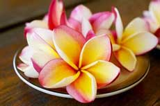 巴厘岛岛花——鸡蛋花