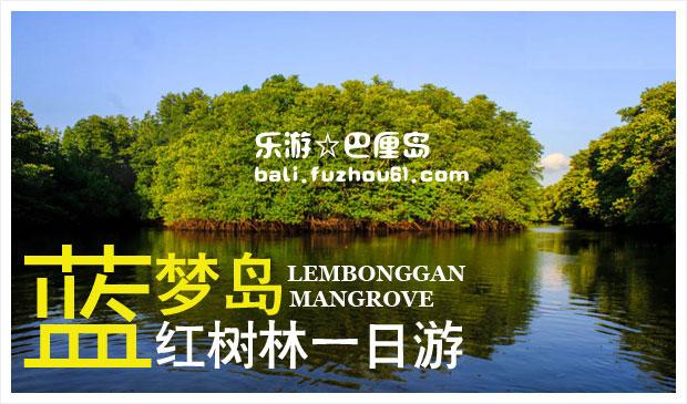 红树林1.jpg