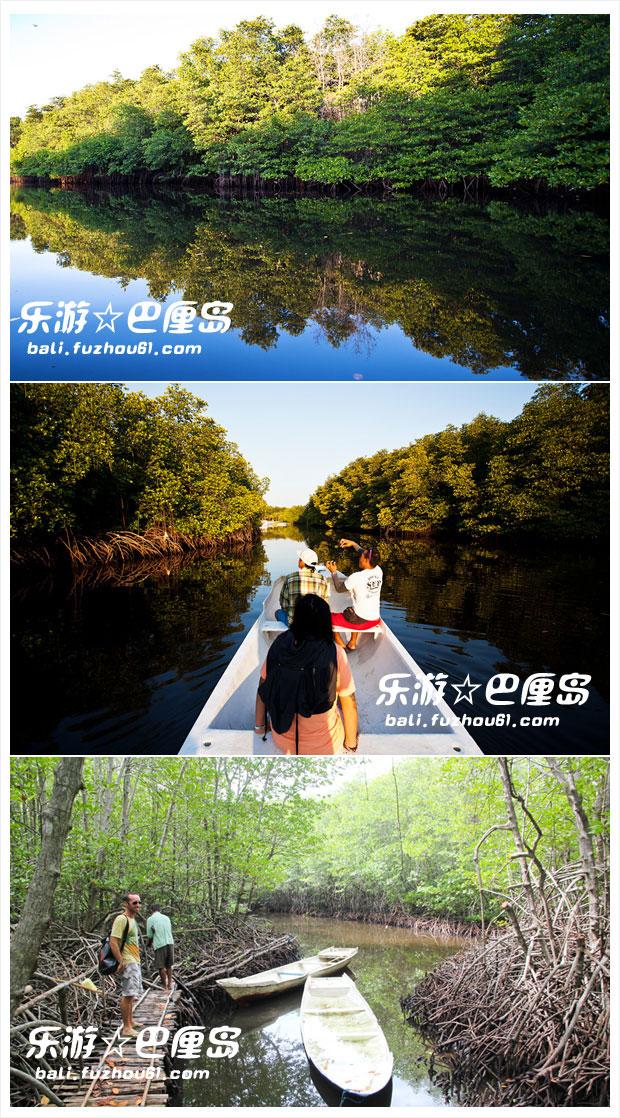 蓝梦岛红树林一日游.jpg