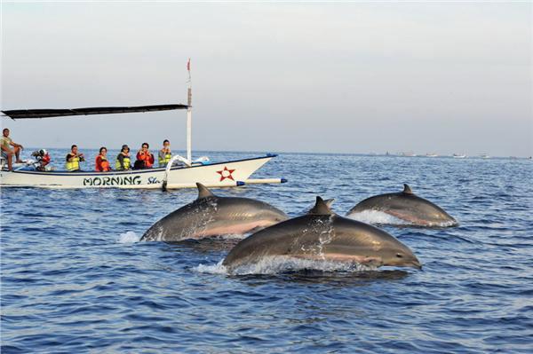 巴厘岛看海豚1.jpg