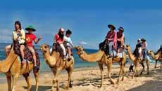 巴厘岛骑骆驼活动——巴厘岛努沙杜瓦沙滩海边骑骆驼旅游套餐预定