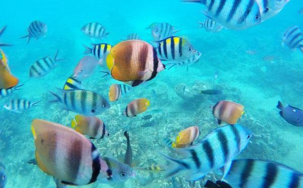 巴厘岛看海豚+浮潜1.jpg