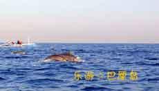 巴厘岛自由行一日游 罗威那/Lovina/罗威纳看海豚一日游